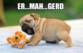 Cute-Dog.jpg via Relatably.com
