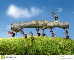 team of ants constructing bridge teamwork royalty stock ants carry log chief on it team work stock image