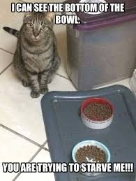 hungry cat memes - Memepile via Relatably.com