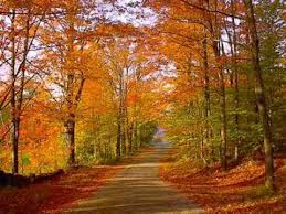 Image result for autumn leaves pictures new england