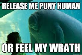 Release me puny human or feel my wrath - Overlord Manatee - quickmeme via Relatably.com