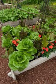 kitchen vegetable garden design  kitchen garden designs  dsc      kitchen garden designs