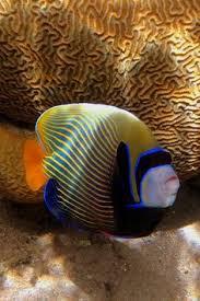 Морская тематика: лучшие изображения (445) | Sea shells ...