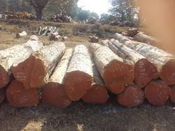 Image result for durability of teak wood