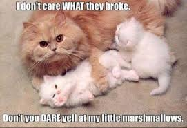 Animal love funny 30 Funny animal captions - part 6 (30 pics ... via Relatably.com