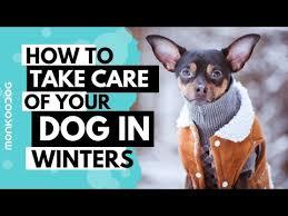 <b>Dog</b> Paw Tips For <b>Winter</b> - Professional <b>Dog</b> Training Tips - YouTube