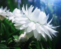 Image result for may flowers