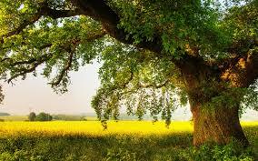 Hasil carian imej untuk tree