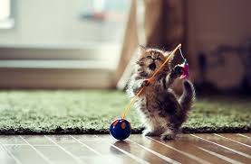 Image result for kitten pictures
