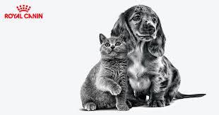 <b>Корм для щенков Royal</b> Canin – подберите правильное питание ...