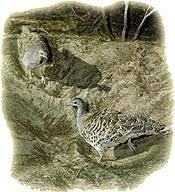 Hz.Sulejmani dhe përplasësi i vezëve të zogjve-Sadakaja e vogël mbron nga fatkeqësia e madhe (Tregim) Images?q=tbn:ANd9GcTHDbOBkZP8lZa5i_aNyC71nsQADIM46T49y3EO-2kp7Xu6cCoM