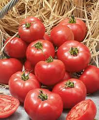 Купить <b>семена</b> Помидоры <b>Ерофеич</b> розовый F1 — от НПО Сады ...