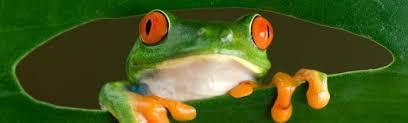 <b>Frogs</b> & Friends, Berlin, Germany — Google Arts & Culture