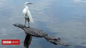 How dinosaur scales became bird <b>feathers</b> - BBC News