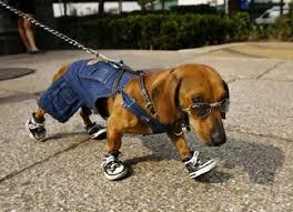 """Résultat de recherche d'images pour """"chien habillé"""""""