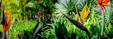 Resultado de imagen de plants