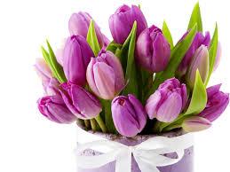 Resultado de imagen para flores lilas vector