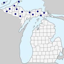 Juncus filiformis - Michigan Flora