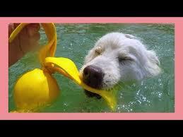 Спортивная амуниция для собак Dog Shop (Gappay)'s Videos | VK