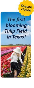 Texas <b>Tulips</b>: Home