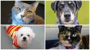 stapleton moms bring home a furry friend during adopt a senior is adopt a senior pet month and the dumb friends league wants to remind everyone looking to add a new pet to their life that love knows no age