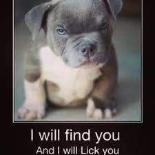 Untitled, Oh. Em. Gee. The cutest puppy evar EVAR!!! #cute... via Relatably.com