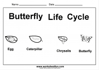 Kindergarten Worksheets / FREE Printable Worksheets – Worksheetfunkindergarten worksheet butterfly life cycle · Science