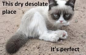 The 50 Funniest Grumpy Cat Memes   Complex CA via Relatably.com