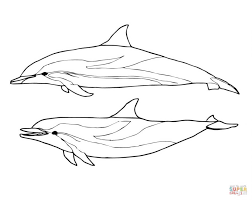 Small Picture Coloring Pages Dolphins Coloring Pages Free Coloring Pages