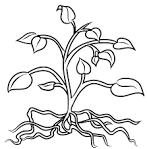 Все раскраски растения