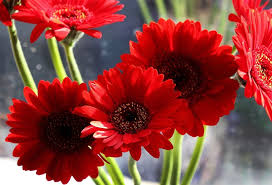 40+ Types of <b>Red Flowers</b> with Pictures | Flower Glossary
