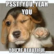 psst! you, yeah you You're beautiful - fist bump puppy | Meme ... via Relatably.com