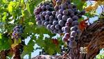 <div>San Francisco&#8217;s Top 5 Wine Tasting Rooms To Visit</div>