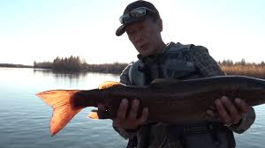 Рыбалка на притоке Алдана. <b>Горная речка</b> Кэлэ - YouTube