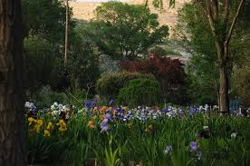 Hondo <b>Iris</b> Farm Is Best <b>Iris</b> Garden In New Mexico