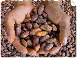 Image result for Cocoa Beans