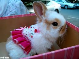 Image result for baby bunny photo
