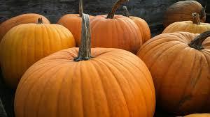 What Happens To <b>Pumpkins</b> After <b>Halloween</b>?