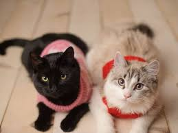Sweaters for <b>Cats</b>: Do They Need Them?   PetMD