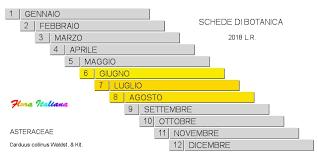 Carduus collinus [Cardo di collina] - Flora Italiana