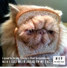 10 Very Important Catnip PSAs | WeKnowMemes via Relatably.com