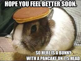 hope you feel better soon. So here is a bunny with a pancake on ... via Relatably.com