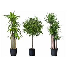 home decor large size ideas tropical indoor plants home design and decor image of amazing office plants