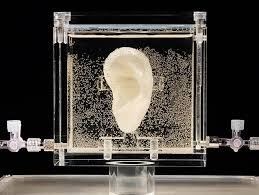 <b>Vincent van Gogh's</b> Ear Has Been 3D Printed out of Living Tissue ...