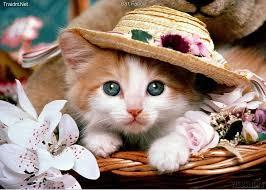 نشاة القط وسلالاته  The Cat