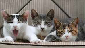 Cats Do Control Humans, Study Finds