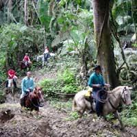 Image result for belize jungle horseback riding