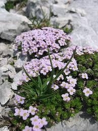Steinschmückel – Wikipedia