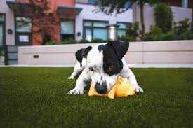 13 Indestructible <b>Dog Toys</b> for the Most Aggressive Chewers