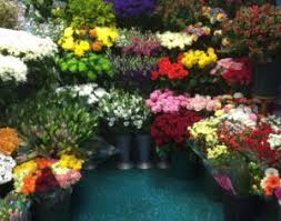 <b>Just Flowers</b> & Gifts - Florist & Flower Delivery in Haltwhistle